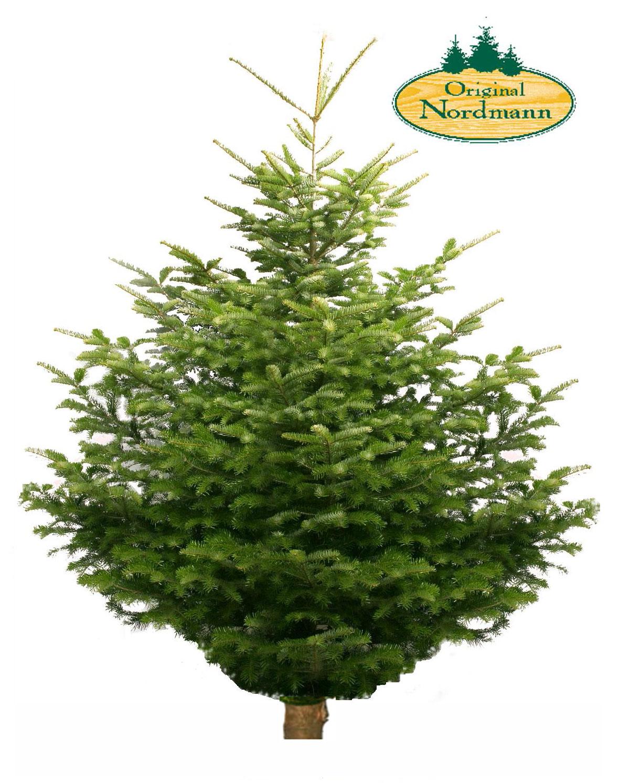 Luxe Nordmann Kerstboom