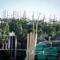 Kerstboom Bekijken3