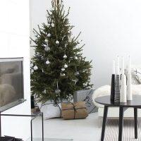 Dennenboom Sfeerfoto